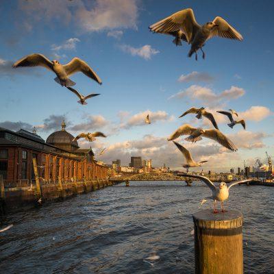 Hamburg Fischmarkt Möwen