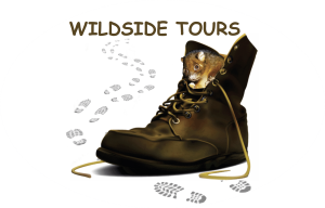 WildSide Tours Logo